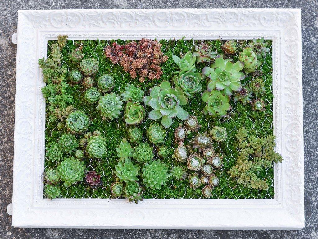 hängender garten mit sukkulenten Hängender Garten: mit Sukkulenten bepflanzter Bilderrahmen sukkulenten im bilderrahmen  1024x768