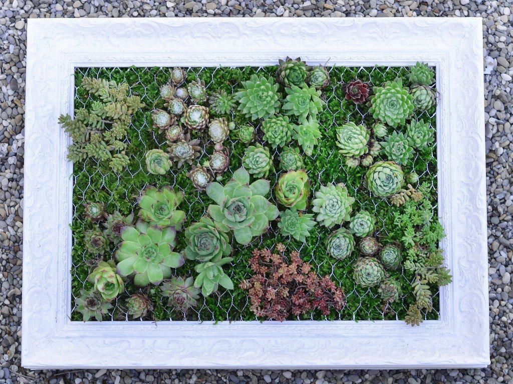 hängender garten mit sukkulenten Hängender Garten: mit Sukkulenten bepflanzter Bilderrahmen sukkulenten im bilderrahmen kies 1024x768