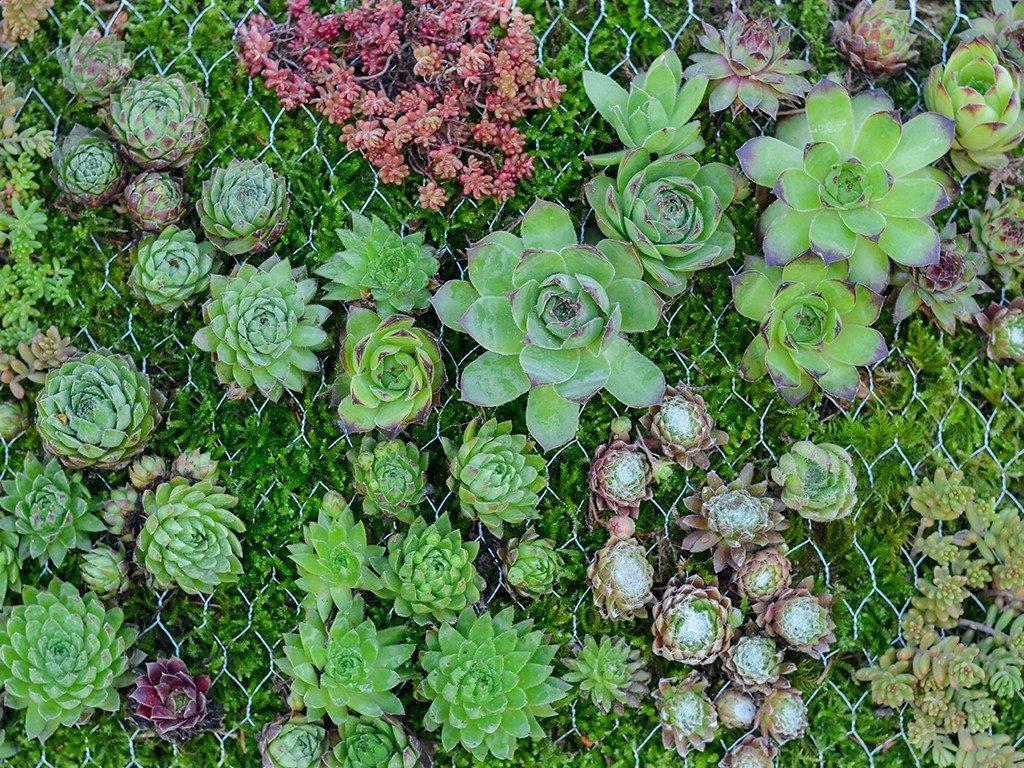 hängender garten mit sukkulenten Hängender Garten: mit Sukkulenten bepflanzter Bilderrahmen sukkulenten im bilderrahmen pflanzen 1024x768