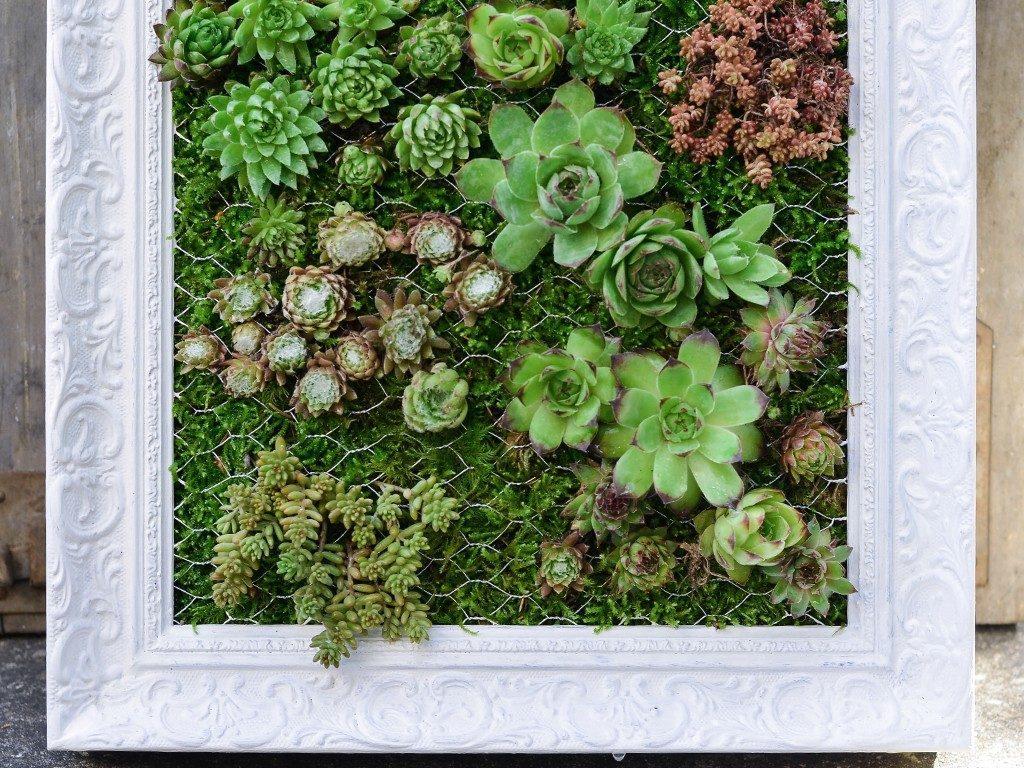 hängender garten mit sukkulenten Hängender Garten: mit Sukkulenten bepflanzter Bilderrahmen sukkulenten im bilderrahmen unten 1024x768
