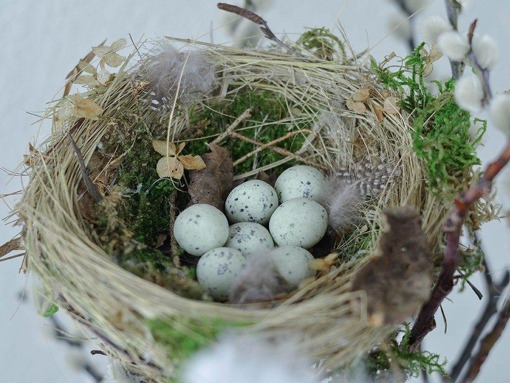 vogelnest aus naturmaterialien DIY Frühlingsdeko: Vogelnest aus Naturmaterialien vogelnest naturmaterial 1 1024x768