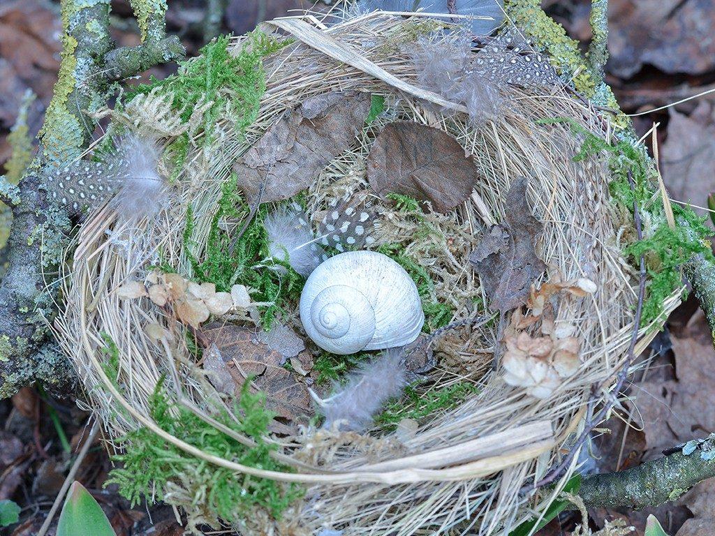 vogelnest aus naturmaterialien DIY Frühlingsdeko: Vogelnest aus Naturmaterialien vogelnest naturmaterial schnecke 1024x768