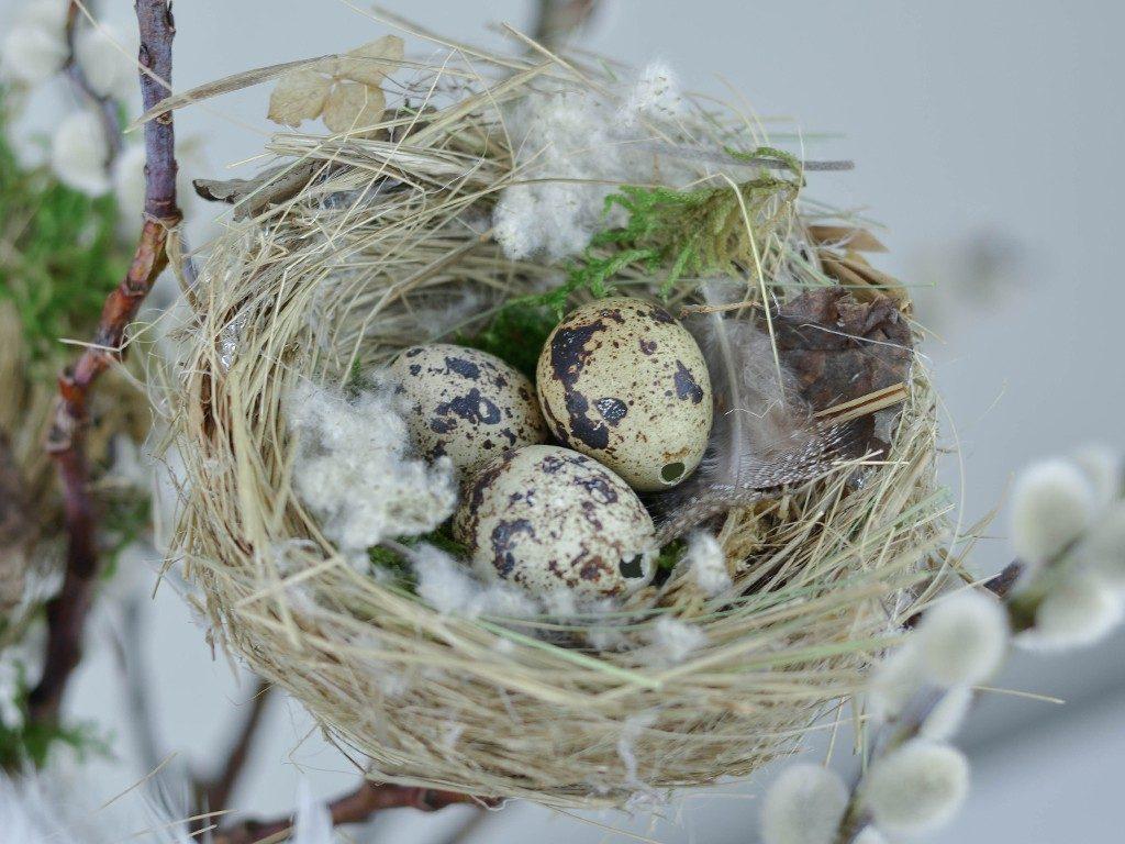 vogelnest aus naturmaterialien DIY Frühlingsdeko: Vogelnest aus Naturmaterialien vogelnest naturmaterial wachteleier 1024x768