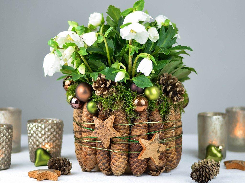 christrose gestalten Tischdeko für die Weihnachtszeit: Christrose mit Fichtenzapfen & Moos dekorieren christrose kieferzapfen 1024x768