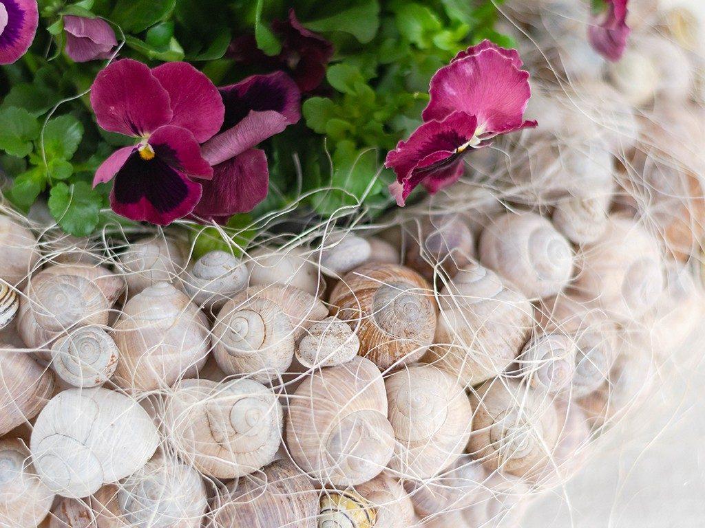 Frühlingsdeko DIY: Kranz aus Schneckenhäuschen mit Frühlingsblumen kranz aus schneckenhuschen 2 1024x768