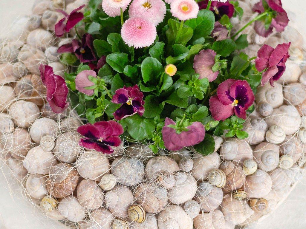 Frühlingsdeko DIY: Kranz aus Schneckenhäuschen mit Frühlingsblumen kranz aus schneckenhuschen 8 1024x768