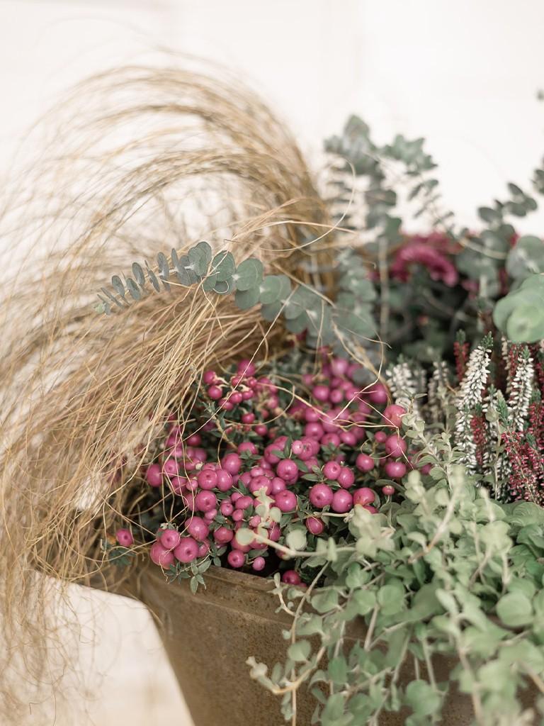 Anleitung für eine herbstlich bepflanzte Metallwanne in Bordeaux-Grün